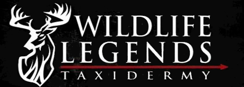 Wildlife Legends Taxidermy